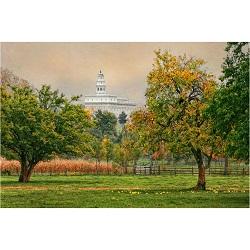 Nauvoo Temple - Apple Tree