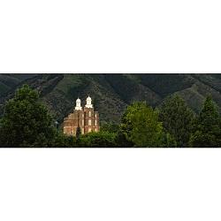 Logan Temple Trees - Panoramic